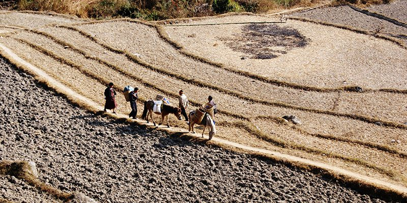 bhutan-farmers-horses-by-hillside_800x400